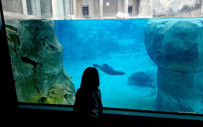 young girl looking into an aquarium